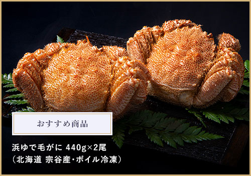 おすすめギフト商品 宗谷産 浜ゆで毛がに440g×2尾(ボイル冷凍)11,500円→10,500円(税込)