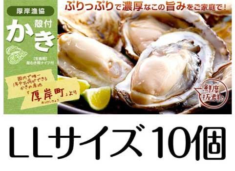 厚岸産 殻付かき(LLサイズ10個)