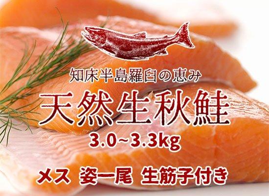羅臼産 天然生秋鮭【3.0~3.3kg・メス・姿】