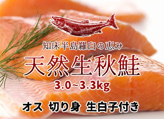 羅臼産 天然生秋鮭【3.0~3.3kg・オス・切り身】