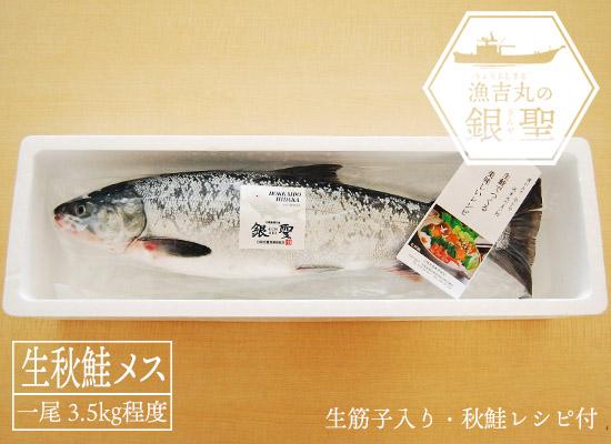 【時化の為、販売一時見合わせ】 漁吉丸の銀聖生秋鮭(メス・3.5kg)