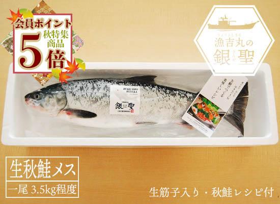 【9月20日頃から出荷開始予定】漁吉丸の銀聖生秋鮭(メス・3.5kg)