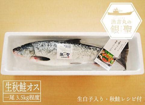 【時化の為、販売一時見合わせ】 漁吉丸の銀聖生秋鮭(オス・3.5kg)