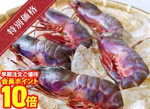 羅臼産ブドウエビ300g(中サイズ7~9尾程度)