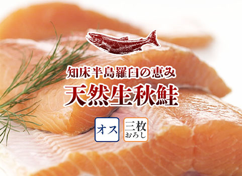 羅臼産 天然生秋鮭【3.0kg~3.3kg程度・オス・3枚おろし】