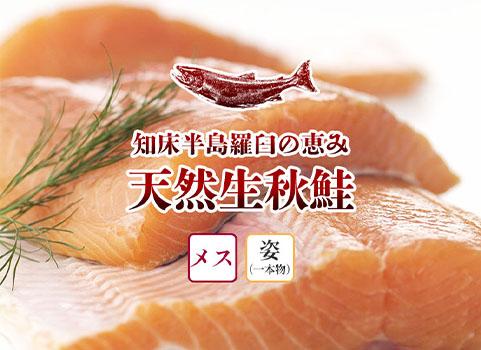 羅臼産 天然生秋鮭【3.0kg~3.3kg程度・メス・姿】