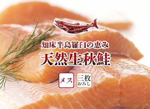 羅臼産 天然生秋鮭【3.0kg~3.3kg程度・メス・3枚おろし】