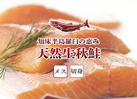 羅臼産 天然生秋鮭【3.0kg~3.3kg程度・メス・切身】
