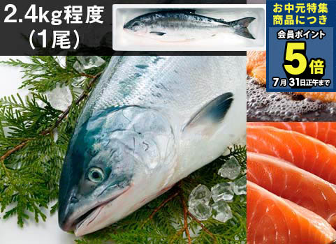 """日高産""""船上活〆""""時鮭(生冷凍)1尾2.4kg"""