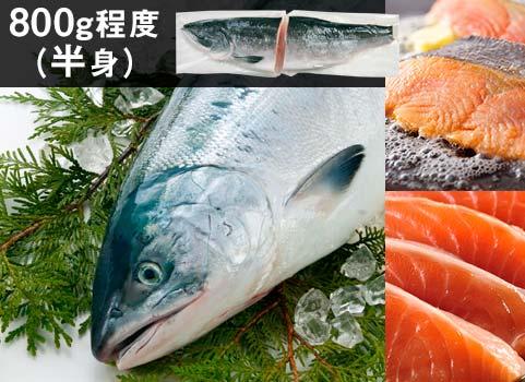 時鮭「船上活〆」半身800g(北海道 日高産・生冷凍)