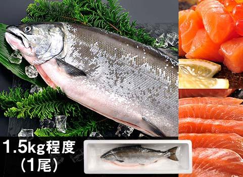 """日高産""""船上活〆""""サクラマス(生冷凍)1尾1.5kg"""