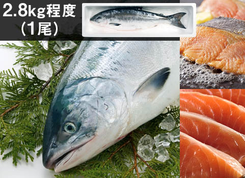"""日高産""""船上活〆""""時鮭(生冷凍)1尾2.8kg"""