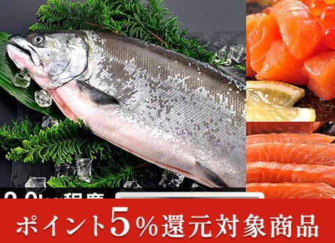 サクラマス「船上活〆」1尾 2.0kg(北海道 日高産・生冷凍)【お中元ギフト】