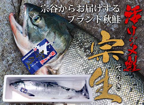 宗谷産 活けジメ鮭『宗生』3.5kg・オス【発送日制限あり】