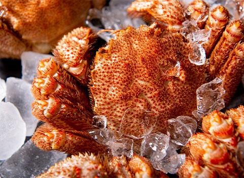 浜ゆで毛がに 1.0kg×2尾(北海道 稚内産・ボイル冷凍)